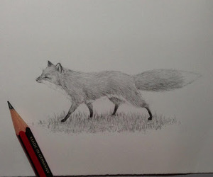 art, drawing, and fox image