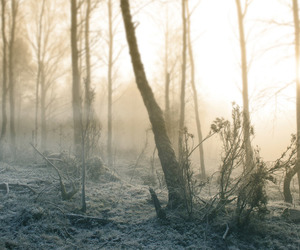 forest, frost, and light image