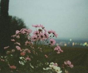 flores, desfoque, and luzes image