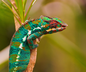 animal, nature, and reptile image