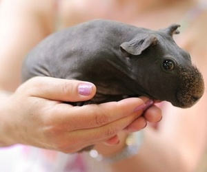 cute, animal, and hippo image