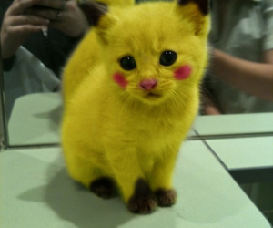 animals, pikachu, and cat image