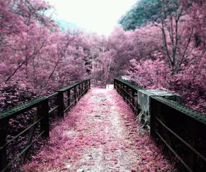 photography, nature, and pink image