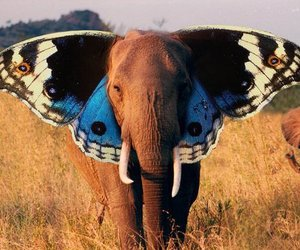 africa, cute, and amazing image