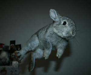 bunny, fly, and rabbit image