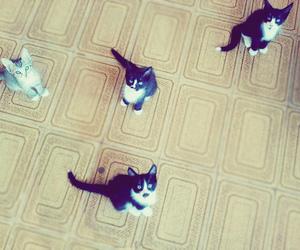 cat, cats, and kawaii image