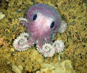 cute, octopus, and animal image