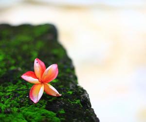 flower, girl, and plumeria image