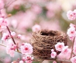pink, flowers, and nest image