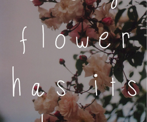 flower and quote image
