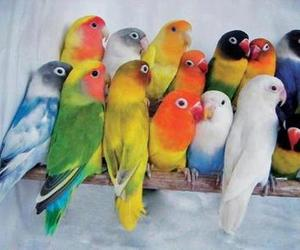 animals, tropical, and cute image