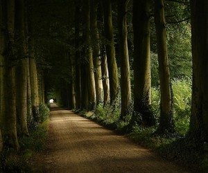 forest, trees, and road image