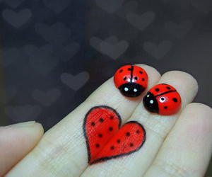 heart, red, and ladybug image