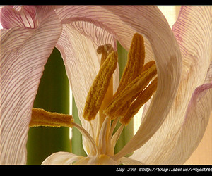 bulbs, amaryllis, and flowers image