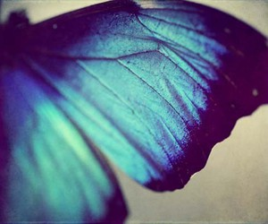 blue and butterfly image