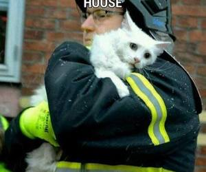 animal, cat, and humanity image