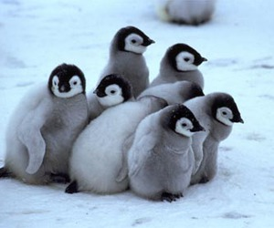 penguin, animal, and baby image