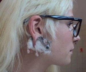 hamster, funny, and piercing image