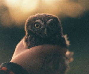 owl, animal, and vintage image