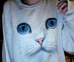 cat, sweater, and eyes image