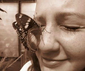 butterfly, girl, and smile image
