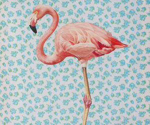 flamingo, pink, and vintage image