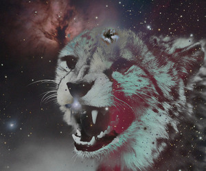 tiger, animal, and galaxy image
