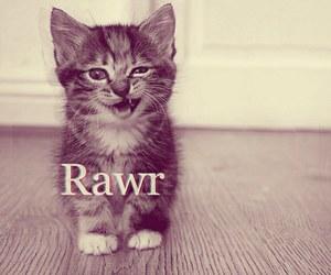 cat, rawr, and cute image