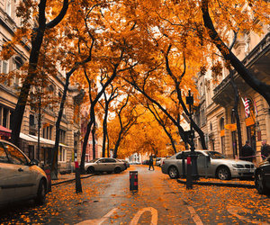 autumn, leaves, and street image