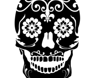 skull and transparent image