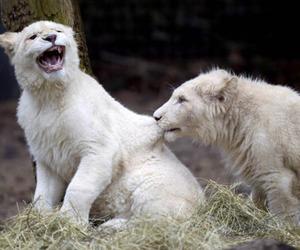 animals and white image