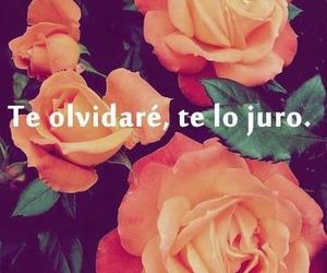 flores and frases image