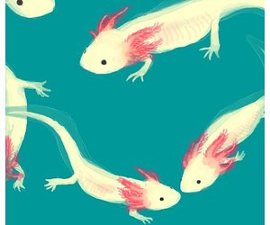 cute and axolotl image