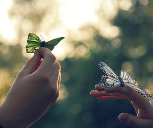 butterfly and photography image