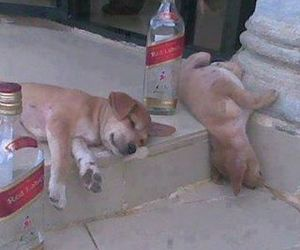 dog, drunk, and puppy image