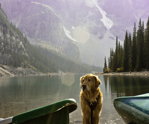 dog, nature, and lake image