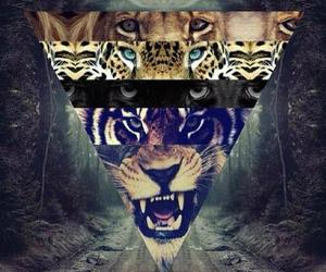 eyes, roar, and triangle image
