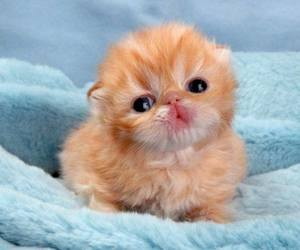 kittens and cute!!! image