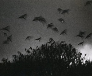 black and white, flight, and photography image