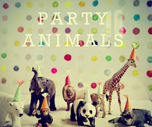 animals, funny, and party image