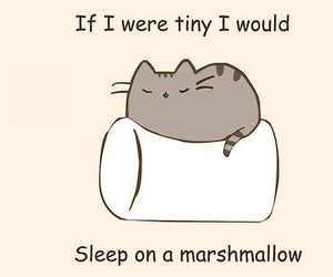 marshmallow, cat, and cute image