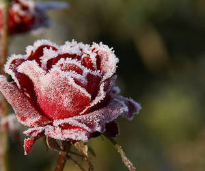 frost image