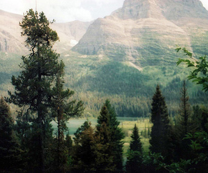 nature, tree, and mountains image