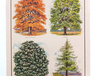 trees, macmillans school poster, and educational chart image