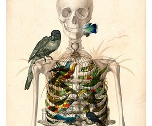 bird and skeleton image