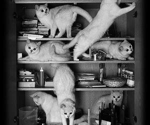 cat, black and white, and book image