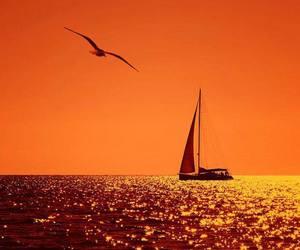 bird, nature, and sea image