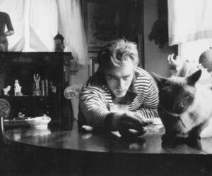 black and white, james dean, and cat image