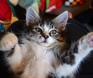 cat, quality, and kitten image