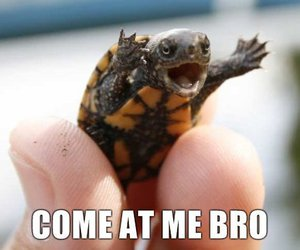 turtle, funny, and bro image
